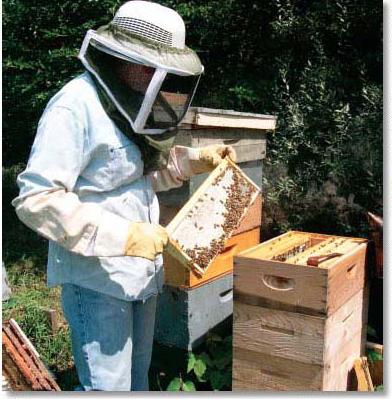 HoneyCommFig1